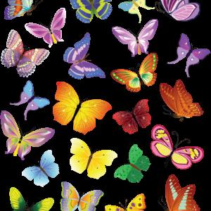Каталог бабочек