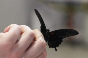 бабочка ночь