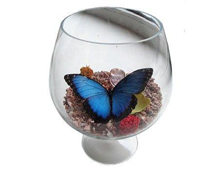 бокал с бабочкой морфидой