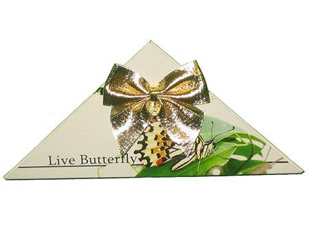 конверт живая открытка с бабочкой