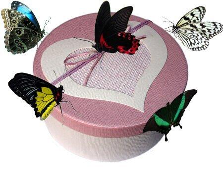 коробка круглая с живыми бабочками