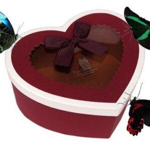 бабочки живые подарить на день святого Валентина