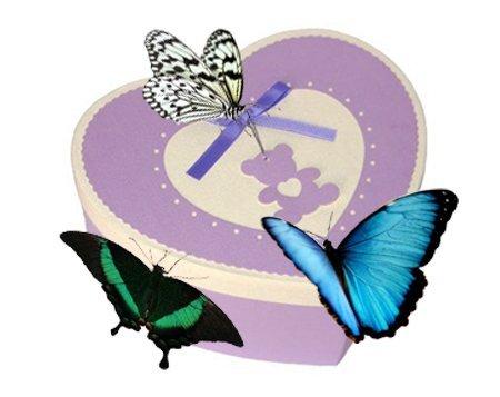 коробка сердце с живыми бабочками