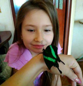 вырастить бабочку дома в бабочкарии