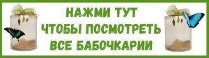 katalog_babochkariy