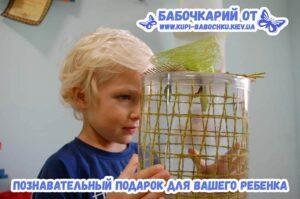 babochkariy-na-5-babochek
