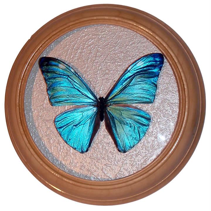 Morpho Adonis засушенная бабочка