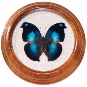 Napoleocles Jucunda сувенирная бабочка в раме