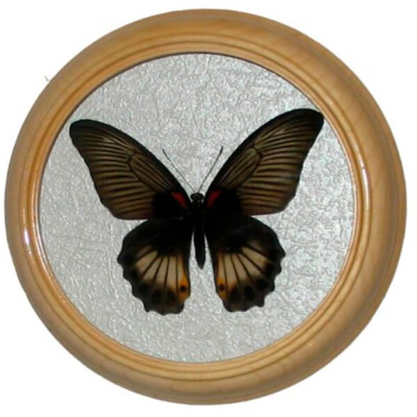 Papilio memnon бабочка в раме