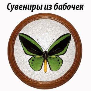 Cувениры из бабочек