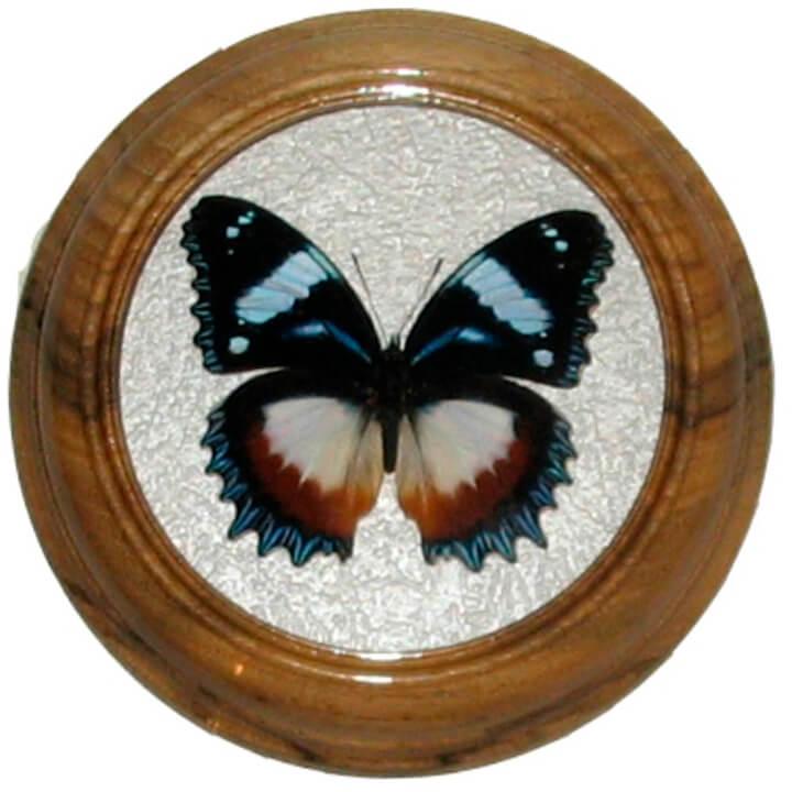hypolimnas dexithea сувенир бабочка в раме