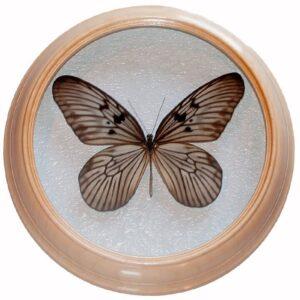 idea idea сувенир засушенная бабочка