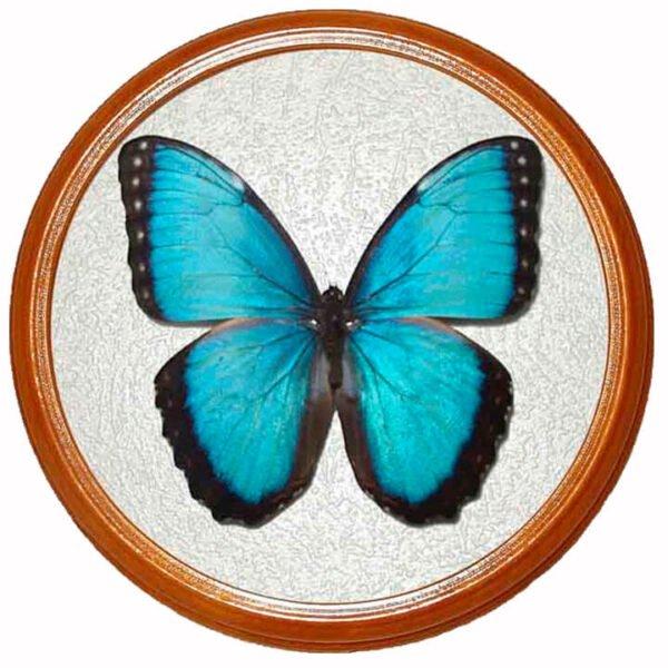 morpho peleides засушенная бабочка в раме