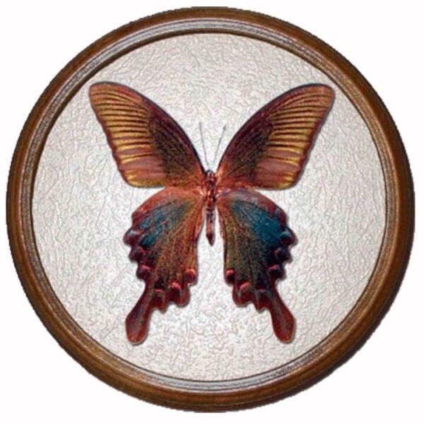 papilio bianor засушенная бабочка