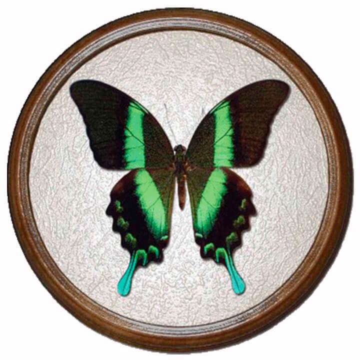 Papilio Blumei бабочка в рамке