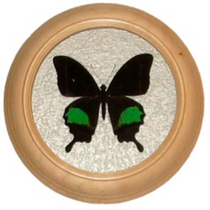 papilio paris сувенир бабочка под стеклом