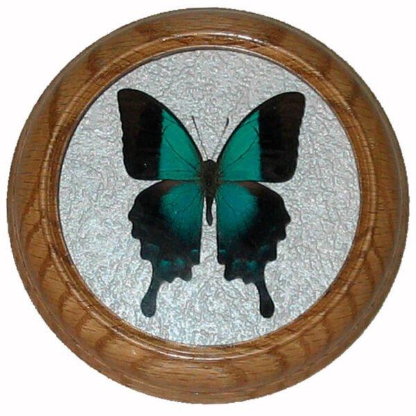 papilio pericles бабочка в раме