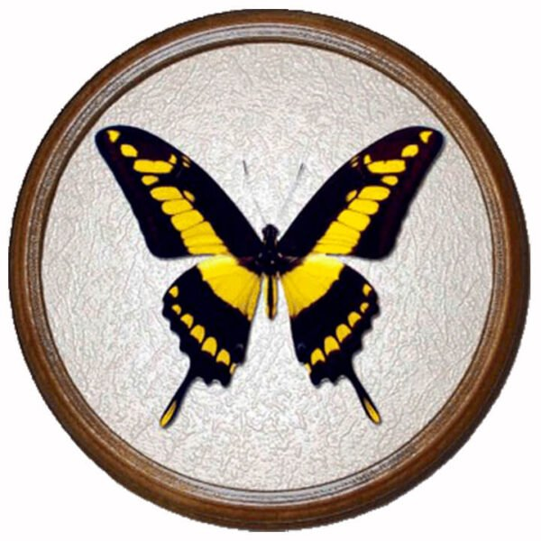 papilio thoas бабочка в раме