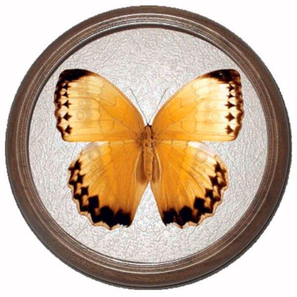 stichophthalma howqua засушенная бабочка в раме