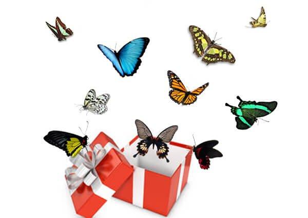 салют из 10 бабочек