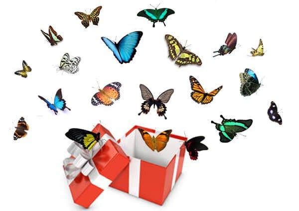 салют из 20 бабочек