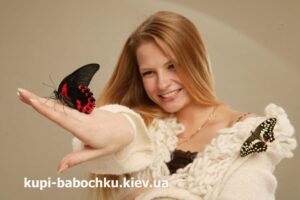 salyut iz babochek - super podarok
