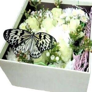 бабочка идея в квадратной коробке