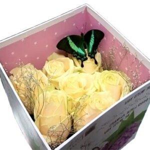 бабочка павлин в коробке