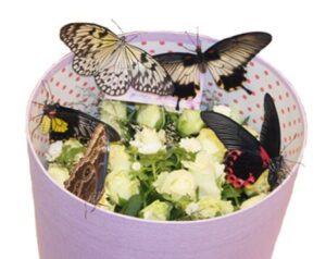 бабочки в круглой коробке с цветами