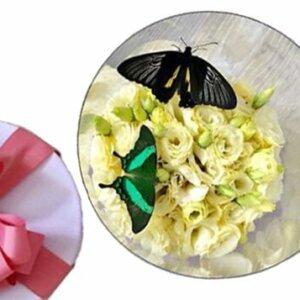 бабочки с цветами в коробке круглой
